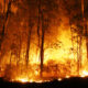 5 Severe impacts of forest fires on the environment