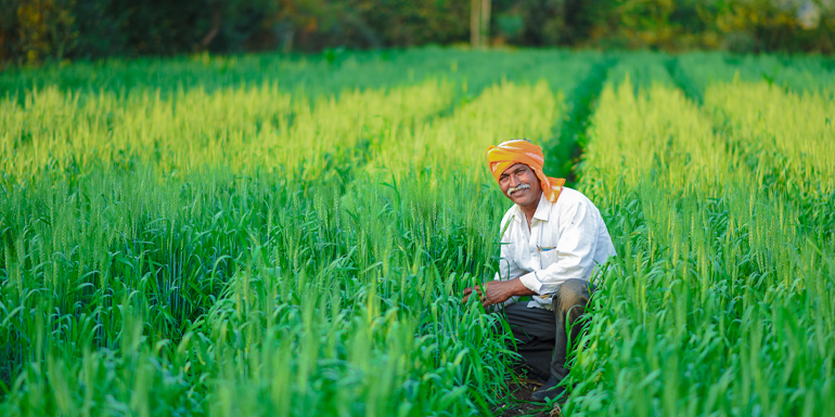 How is hydroponics changing the phase of Indian agriculture