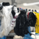 Environmental Effects of Fast Fashion